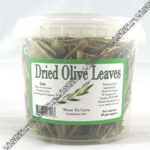 dried olive leaves